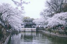 无锡赏花 | 春天赏樱指南  无锡有三大赏花盛事,首当其冲便是鼋头渚的樱花。这里的樱花盛世主要集中在