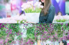 广州新晋网红拍照圣地,一年四季鲜花盛开!  郁金香花展: 纯净的白色,还有稍微带点粉的粉白色郁金香是