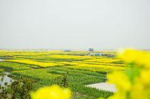 三月春光里,油菜花是江南最易见到的风景,一片片,一陇陇,漫山遍野,是春天里最耀眼的靓色。  如此梦幻
