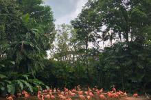 野炊的好地方         我们经常去的地方就是公园,也见过不少不同类型的公园,我们这次来新加坡玩