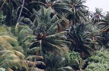 马尔代夫,马累特色网红打卡圣地  马尔代夫和马累是我一直都非常的向往的地方,我对这里也是充满了好奇的
