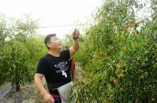 应朋友之约,开车到石家庄接老师同学一同前往孟村回族自治县,观八极拳,采摘金丝小枣。