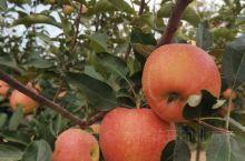 暖泉十三组苹果园,好玩又好吃!!!