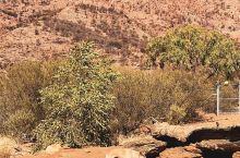 漫漫黄沙中我找到自然的真谛 从小就听人家说大漠苍茫,一直没机会看,终于去了艾丽丝泉沙漠公园,我才真正