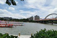 每年端午广州番禺长提西路看龙舟赛