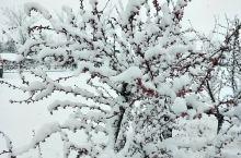 那年冬天的雪景