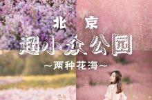 【北京紫苑花+粉黛子花海 就藏在五环地铁直达的小公园】  这个月是紫苑花和粉黛子的季节,北京最近的紫