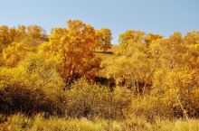 黄花沟的主景点/黄花沟地质公园  这次去的草原,里面有一个重点景点就是黄花沟,这里的夏天真的超级热门