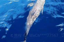 美丽的海豚在船前游过