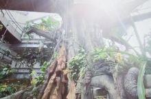 绿色星球,在这里体验漫步雨林,带娃必打卡的地方,这里有最珍贵的动植物,土豪植物园,全部散养…