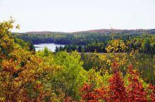 10月约起来加拿大赏枫