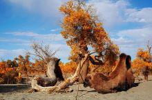 为大漠生,为大漠亡,在胡杨倒地的那一瞬,我仍能听到它低声细数风雨沧桑之后的美丽传说。