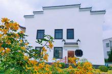 化州新农村:蒲山,小仿江南建筑