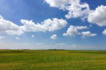 早上从茶卡去往祁连山,中午又到了青海湖畔。天空澄澈明净,云依然洁白而轻盈,金黄的油菜花已经开始凋谢,