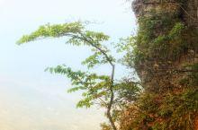 黄鹤桥峰林景区,其山体石林形状奇异,象黄鹤飞天,如半壁江山,有的形似金鸡独立。景色迷人,令人惊叹不已