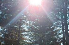 清晨的一缕阳光