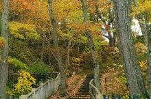 11月5日从札幌乘JR到函馆,天气不错,多云;6日我们到五陵郭等公园观赏枫叶。每年,北海道的枫叶在日
