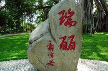 """游瑞丽:欣赏""""独树成林""""奇景2019年10月23日(周三)"""