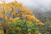 石棉草科乡的彩林