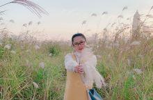 秋风冷萧瑟,芦荻花纷纷。 现在汉口江滩的芦苇正是繁茂,菊展正是鲜艳。吸引了许多市民前往欣赏拍照。