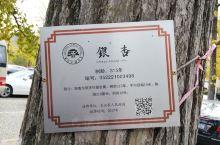 浙江长兴,十里古银杏长廊 长兴·湖州