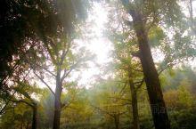 八都岕除遍生银杏之外,其文化渊源也特别悠长,据传汉代刘秀曾八躲追兵至此,八都岕由此得名。长兴县银杏长