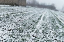 梦寐已久的大雪终于来了。真是无比的开心,万物复苏,瑞雪兆丰年。