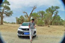 轮台胡杨林 从库车直接去的轮台胡杨林,从沙漠公路一直往南开,双车道,从乌鲁木齐去和田的车也是走这条路