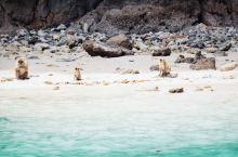 皮皮岛上有一座非常小的海滩,但是在这座海滩上经常会有成群结队的野生猴群出没。他们会在海边的沙滩上嬉戏