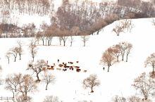冬季的乌兰布统,摄影爱好者的天堂,随手一拍就是大片!哈哈哈
