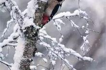 当雪花落地,精灵们就出来装扮这个世界了!很可爱的宝贝儿们,很喜欢抓拍的她们!