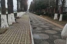 行走澄碧湖,白天黑夜不同心境。澄碧湖位于江西省南昌市南昌县莲塘镇,总面积1500亩,现已开辟为公园。