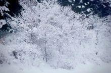 冬季的雪花美丽的挂树