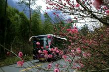 每年到了二三月份,位于张家界武陵源核心景区的黄石寨梅园内,五千余株梅花开了,竞相绽放着浅白、淡黄