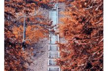 #天姥山上的大梦一场,是李白一生最真实的写照#  真实的历史上,李白大概率从未到过天姥山,这可能大大