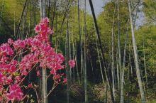 宁海深甽镇,南溪森林公园,沿着温泉路前行,二边山竹林密植,树木葱绿,令人心旷神怡,打开天窗,开启四扇