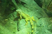 罗源湾海洋世界值得一去,带上小朋友就更好了,增进他们的见识,对大自然的了解。多认识海洋、热带雨林动物