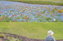 最美人间四月天@辰山 辰山的樱花雨美到让人窒息…… 工作日上午九点多 游客三三两两 宝宝在樱花雨中尽