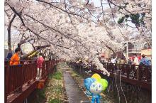 真的很美,难怪那么多人喜欢樱花