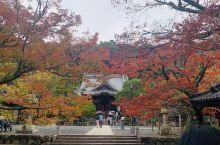 修善寺不愧为红叶的圣地,虽然遭受到台风的破坏,依然展现出秋天的凄美,难怪悲情小说家川端康成等大文豪们
