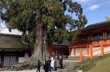 奈良真的是小鹿众多 春日大社今天还有日本夫妇在拍照片 真的cool