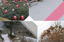 (更新)冬日 圖1,這幾天剛下一場雪,景區內也設置了聖誕裝飾。 秋紅~1 平日也是個很有特色的樹木園