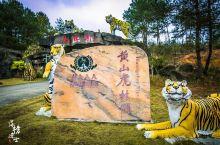 黄山虎林园,我国最大的东北虎养殖基地