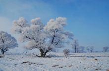 东北的冬季是我比较喜欢去感受的。连续三年冬天都去了哈尔滨,吉林,长春,看了万里冰封的黑土地,雪乡雪谷