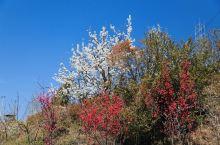 桃红梨白花之谷