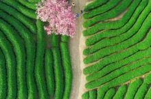 龙岩茶山风景