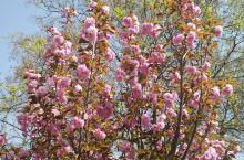 春暖花开的季节
