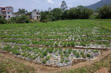 农民伯伯辛勤种下的作物已经长出来了,处处一片生机。