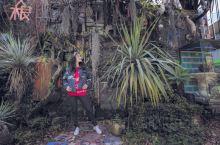早安,是濑户内海看展览的第二天~ 是不是以为我会去🈶️草间弥生大南瓜的直岛, 其实怕艺术节人群扎堆没