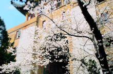 #春季赏花#||武汉大学赏樱攻略  每年三月中旬到四月初,都是武汉大学人潮涌动的时候,因为校内的一千